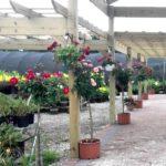 Sunny Gardens Greenhouse Photo