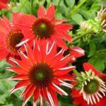Sunny Gardens Photo
