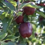 Steffens Orchard Market Photo