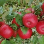 Blok Orchard Photo
